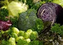 Biohumus Eco Es - 100% Organic Dry Fertilizer